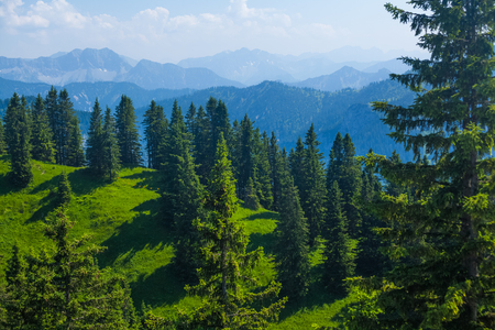 Green hills with pine trees and Alps on the horizon. Germany Фото со стока