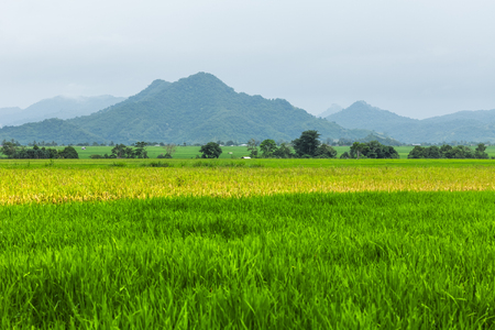 Rice fields and mountains. Island of Flores, Indonesia