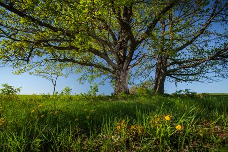 Alberi verdi su un prato con erba verde e cielo blu chiaro Archivio Fotografico - 89637567