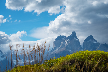 Torres del Paine National Park, Cuernos Towers and wild herbs on the foreground, Chile 写真素材