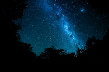 Starry sky and Milky Way galaxy with trees around the frame