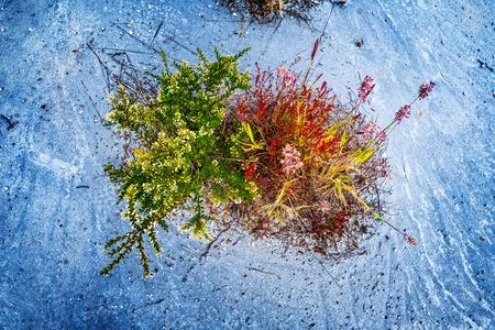 花を持つ緑の野生のハーブは、乾燥した砂の土地に成長します, パタゴニア, チリ
