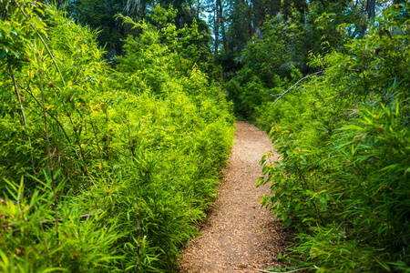 Gravel path in a lush green forest, Patagonia, Argentina 写真素材