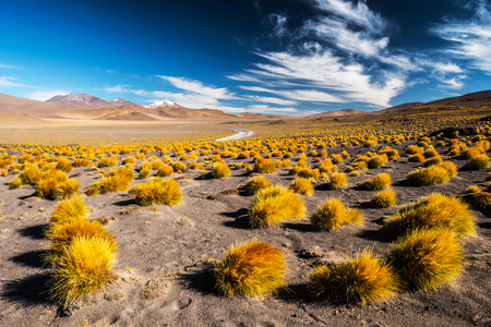 Desert with mountains and vegetation. Landscape of the Sud Lipez province. South of Bolivia