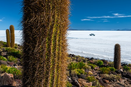 Cactuses of the island of Incahuasi in the middle of the salt flat of Salar de Uyuni, Bolivia Stock Photo
