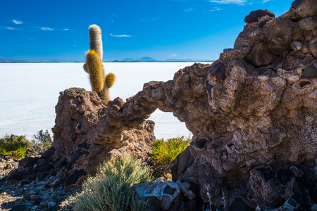 Cactus island or Incahuasi island in the middle of salt flat of Salar de Uyuni, Bolivia