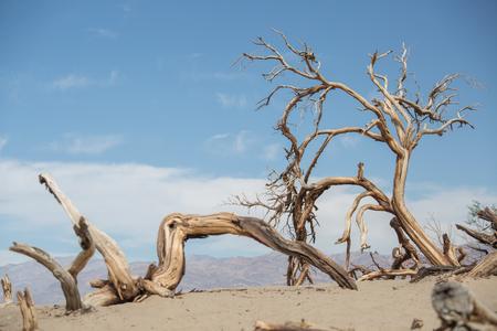 Árboles secos en el Valle de la Muerte, EE. UU.