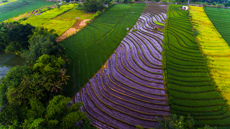 Aerial view of the rice field on the island of Bali, Indonesia Stock Photo