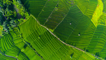 Aerial view of the rice field, Bali, Indonesia Stock Photo