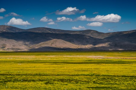 Field with yellow grass in Bolivia
