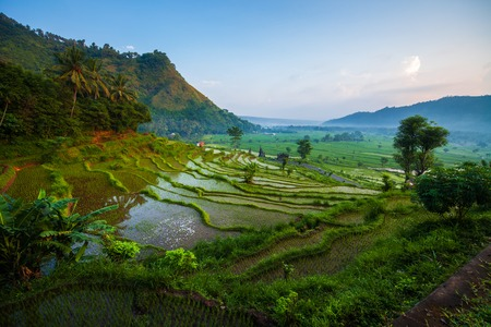 Rice fields of the island of Bali at sunrise, Indonesia 스톡 콘텐츠