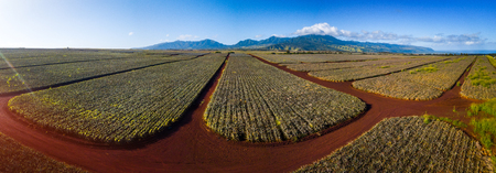 Panorama of the pinapple plantation on Hawaii Фото со стока