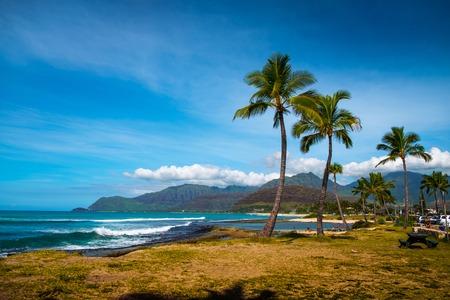 Palm trees on the West Shore of Oahu island, Hawaii