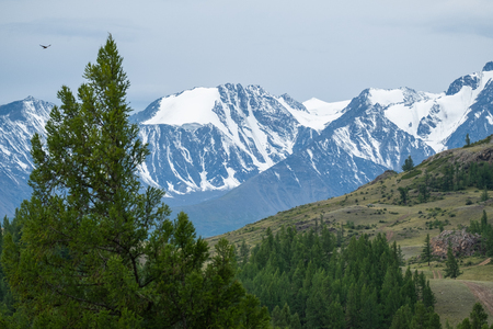 Snow covered mountains Northern Chuysky Range and pine trees. Altai, Russia