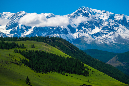 Snow capped mountains and green hills with pine trees in Altai Republic, Russia