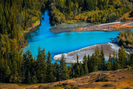 Blue rapid river flows through the wild area with coniferous forest. Altai Republic, Russia Stock Photo