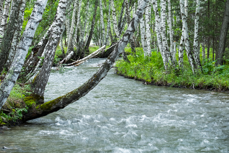 River flowing through the forest with birches 写真素材