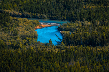 Blue rapid river flows through the wild area with coniferous forest. Altai Republic, Russia.