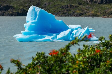 Iceberg floats on the lake with grass on the foreground. Lake of Grey in Torres del Paine National Park, Chile