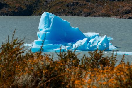 Iceberg floats on the lake with yellow grass on the foreground. Lake of Grey in Torres del Paine National Park, Chile