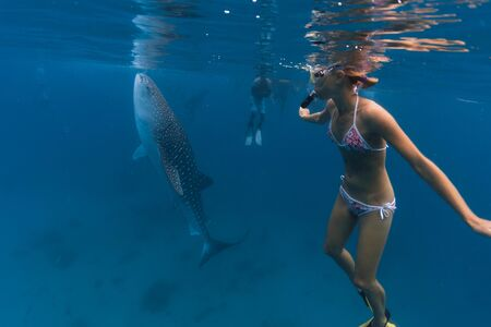 Young woman snorkeling with the Whale shark (Rhincodon typus) in the tropical sea. Oslob, Philippines