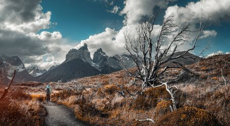 Woman hiker walks on the trail among the burnt and dry trees with snow capped mountains on the background. Torred del Paine National Park, Chilean Patagonia.