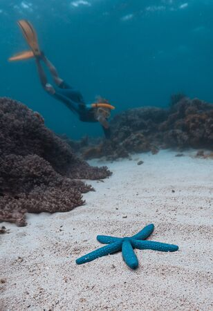 Woman snorkeling and skin diving in the tropical sea and swims closer to the blue starfish lying on the sandy bottom. Focus on the starfish