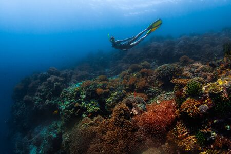 Young woman snorkeling and skin diving over the vivid coral garden in the tropical sea in Philippines Imagens
