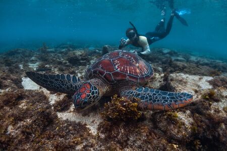 Man snorkeling and swimming with the colorful sea turtle (Cheloniidae) in the tropical sea near the Apo island in Philippines Banco de Imagens - 132920367