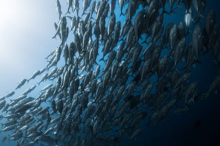 School of fish in the sea
