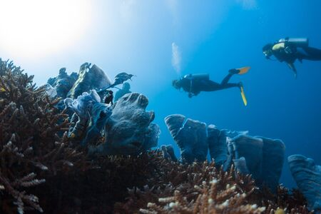 Divers spotted and watch the frogfish hidden among the corals in the tropical sea in Philippines Banco de Imagens - 132922018