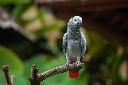 Parrot sits on the dry tree with natural background Standard-Bild