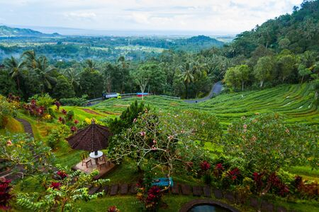 Green paddy fields and garden with flowers. Famous rice terraces in Bali, Indonesia