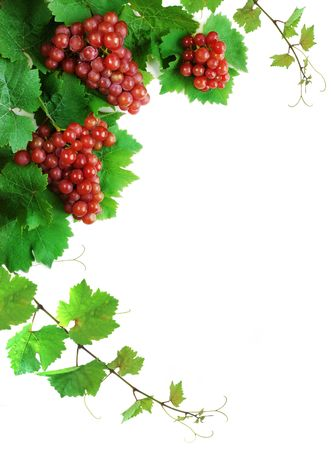 cluster: Grapevine decoration, isolated on white background