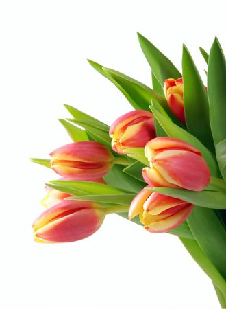 Bouquet of fresh tulips, in detail, on white background Stock Photo - 2709059