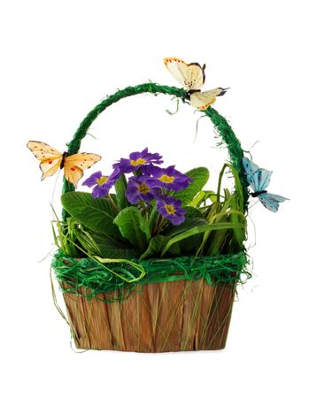 primroses: Spring basket with blue primroses and butterflies