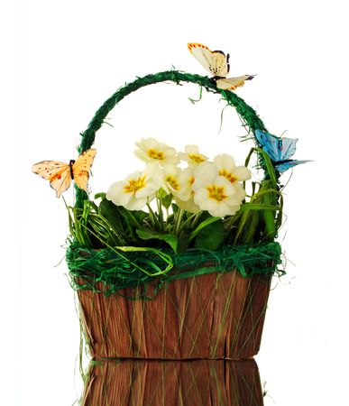 primroses: Spring basket with primroses and butterflies Stock Photo
