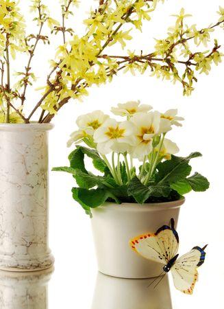Spring flower still life