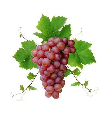 pink wine: Ornamental motif of pink wine grape, isolated