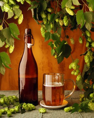 Beer and hops still life in retro style