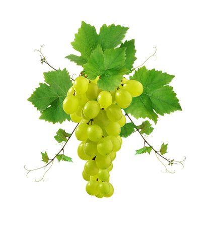 Ornamental grape and vine Stok Fotoğraf