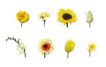 Single yellow flowers photo
