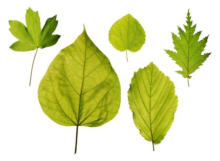 Leaves of park trees