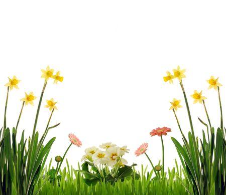 primula: Garden scenery