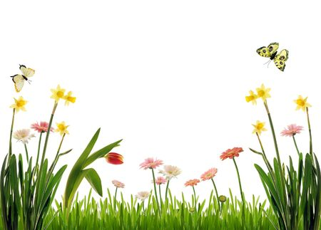Spring flower scenery with butterflies photo