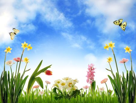 tulips: Spring flower scenery on blue sky Stock Photo