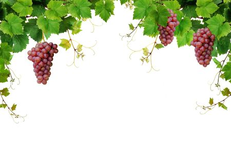 Grapevine border with pink grapes Stock Photo - 6954421