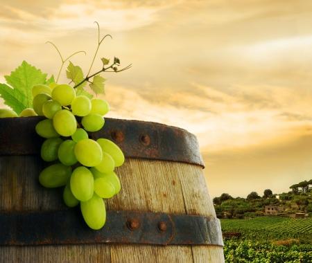 Wine barrel and grape in vineyard photo
