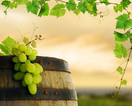 Wine barrel and grape with vine frame photo