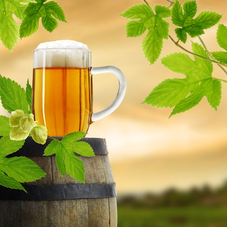 draught: Beer and hop plant in retro style